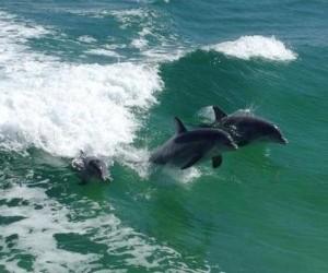 Dolphin cruise in Destin Florida